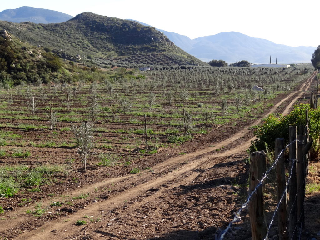 By Adam Jones from Kelowna, BC, Canada - Valle de Guadalupe - Wine Country - Outside Ensenada, BC - Mexico - 03, CC BY-SA 2.0, https://commons.wikimedia.org/w/index.php?curid=64200808