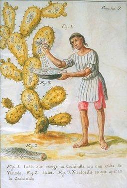 Recolección de cochinilla. Imagen de Robert and Talbot Trudeau vía Flickr