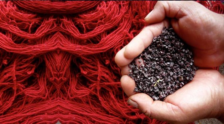 Color obtenido de la grana cochinilla. Imagen de Gela Rodríguez en http://urdimbre.com.mx/grana-cochinilla-un-bicho-de-color-rojo-mexicano/