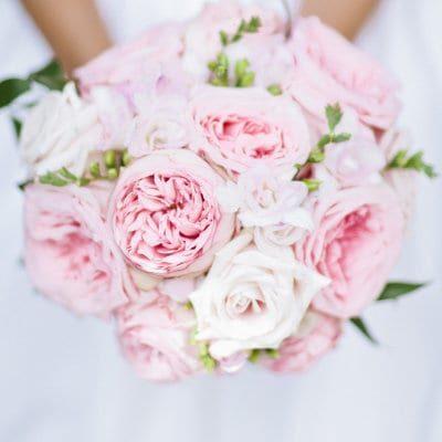 Rosa centifolia. Imagen de Debra Eby Photography