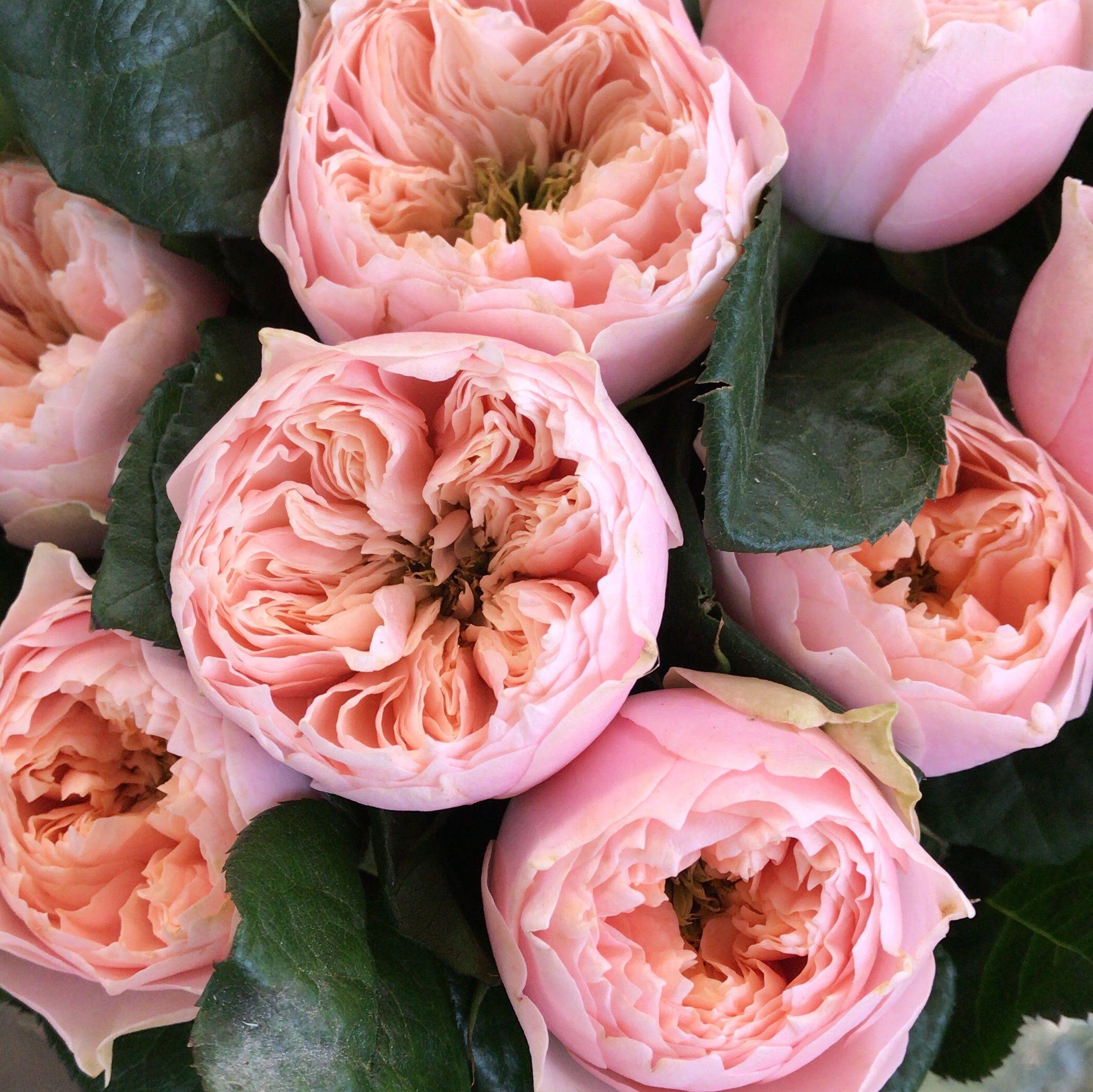 Rosa inglesa. Imagen de  Ana Cecy Machuca vía pinterest